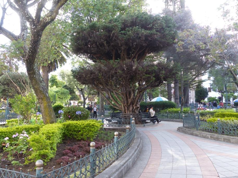 The Square Cuenca