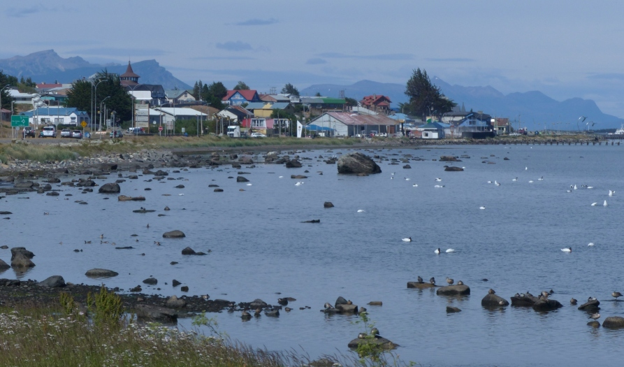Back in Puerto Natales