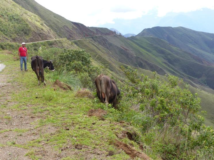 Tending the livestock.