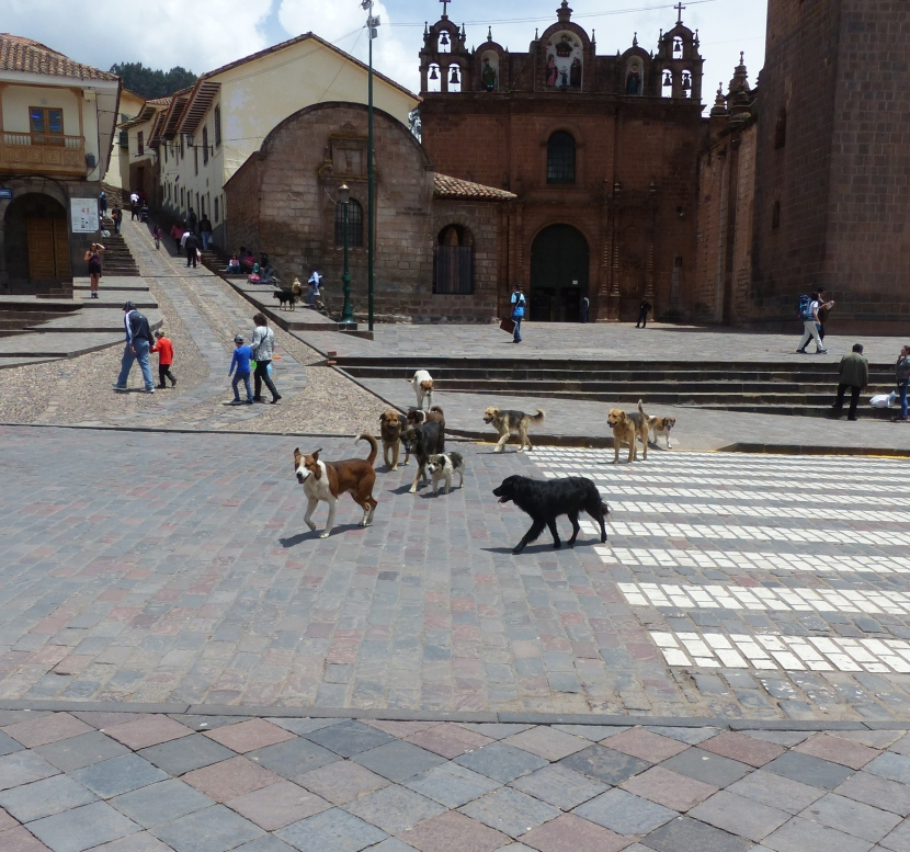 The ever present pack of dogs in the square.