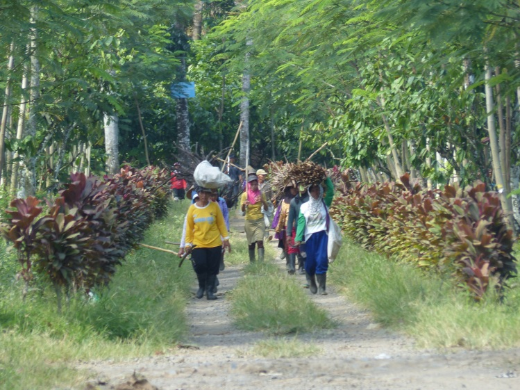 Workers coming from the plantation.