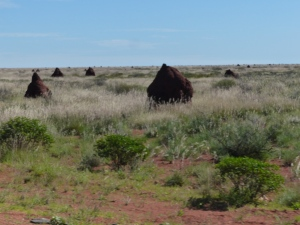 Fields of termite mounds.