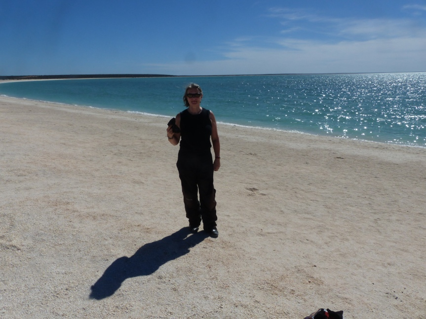Shark Bay, shell beach